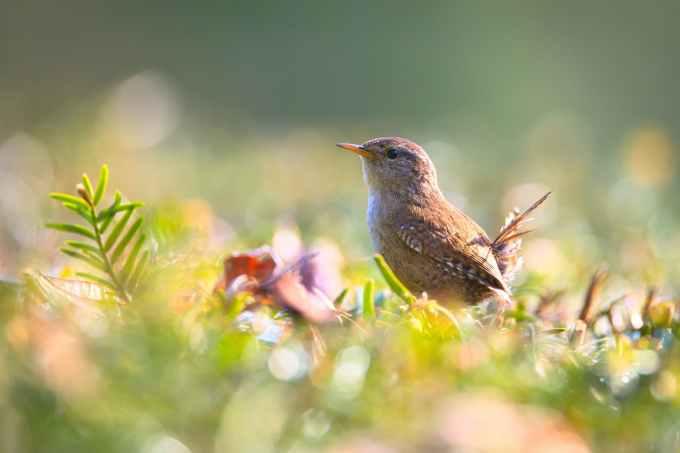 ptica u polju