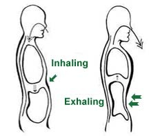 Abdominal-breathing