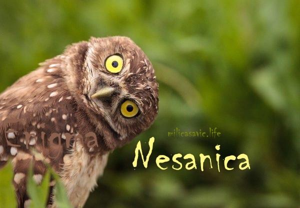 sova nesanica - Copy